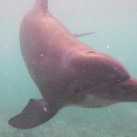 galeria-dolphin-trek-dolphin-cove-ocho-rios-3