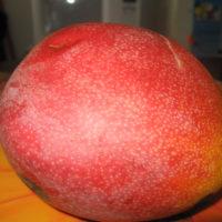 bastard-mango